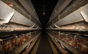 Carne da macello negli allevamenti parte 1