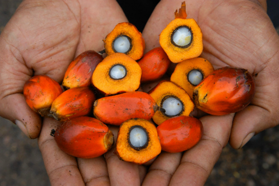 Palm oil: the expert responds