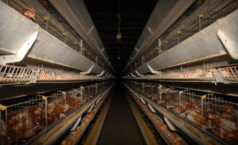 Meat for slaughter: farms - Part 1