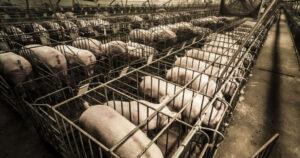 Possiamo fidarci della carne che mangiamo?